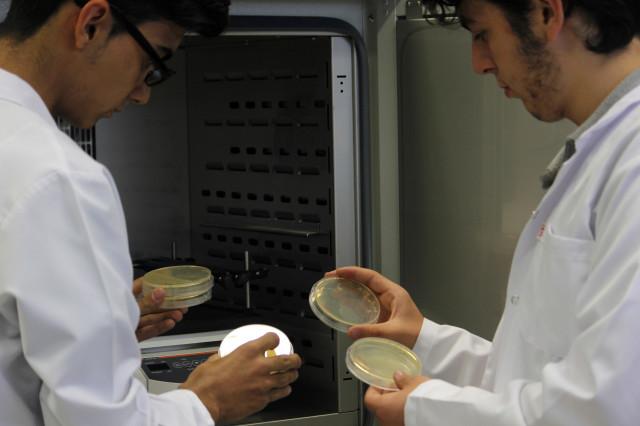 Hamam Böceklerindeki Kitinden Radyasyondan Koruyucu Elbise Yaptılar