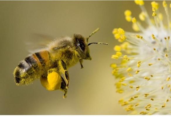 Arılar Adana'da da Ölüyor