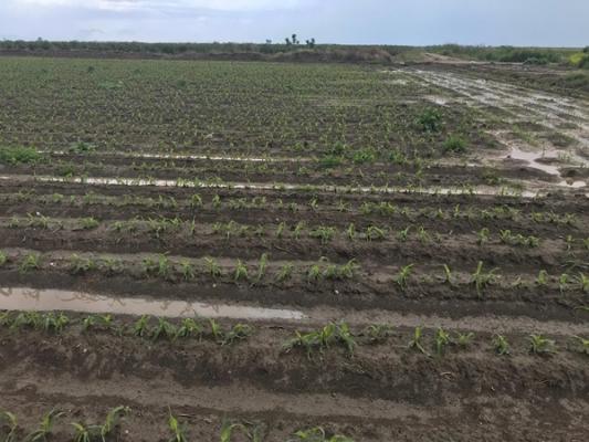 Karataşlı Çiftçiler Dolu Mağduru