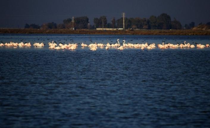 Adana ve 3 İlde Su Kuşu Sayımı
