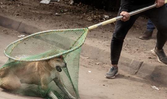 Azerbaycan'dan Kuduz Köpek Lake County'deki Köpekleri Açığa Çıkardı: CDC