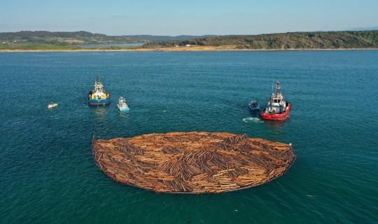 Balıkçıların Tomruk Korkusu