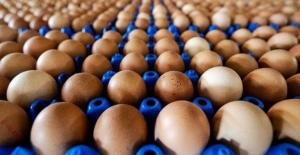 Yumurta Skandalı İngiltere ve Fransa'ya Sıçradı