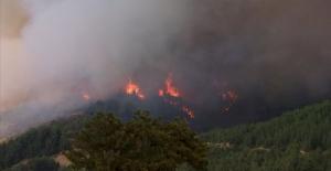Adanada Orman Yangını! Yakın...