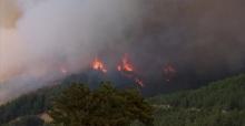Adana'da Orman Yangını! Yakın Evler Boşaltıldı